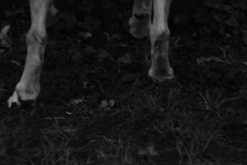 dog legs