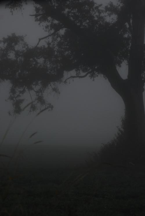 tree/fog